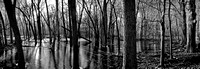 """Somme Woods"", barren, ice, trees, water, winter, panoramic"